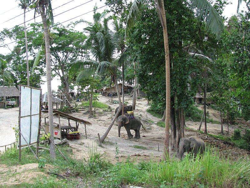 Foto elefanten_camp.jpg