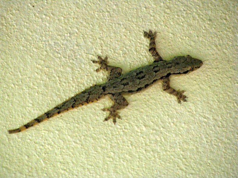 Foto gecko.jpg