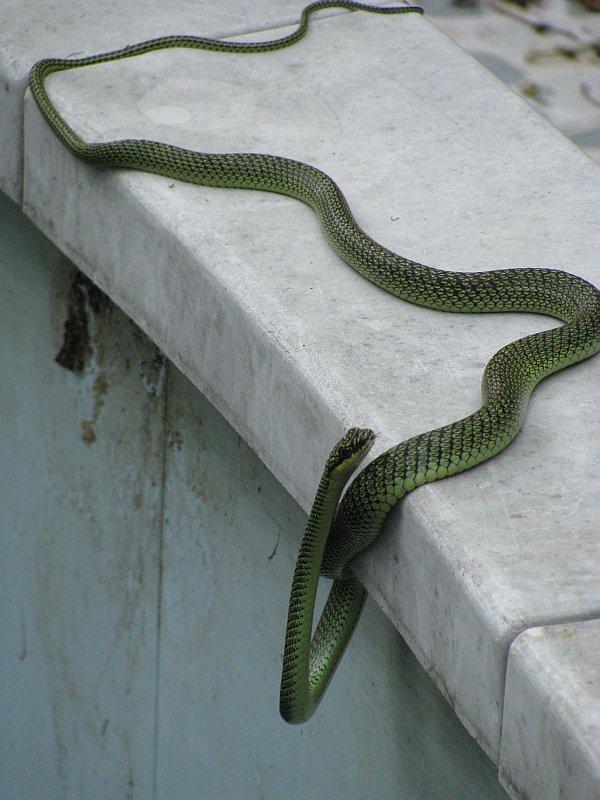 Foto snake2.jpg
